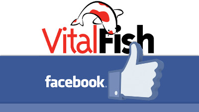 Like volg vitalfish facebook